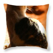 Sun Cat Throw Pillow