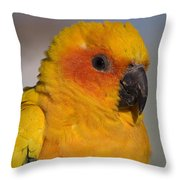 Sun Conure Throw Pillow