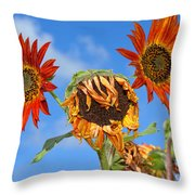 Sun Drenched In Autumn By Diana Sainz Throw Pillow