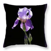 Sun-drenched Iris Throw Pillow