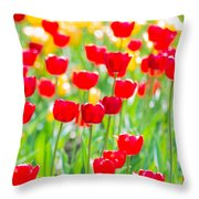Sun Drenched Tulips - Featured 3 Throw Pillow