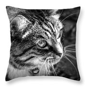 Sun Kissed Kitty Throw Pillow