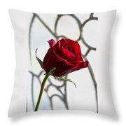 Sun Kissed Rose Throw Pillow