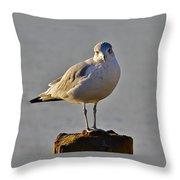 Sun-lit Glaucous Gull Throw Pillow