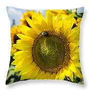 Sun On The Sunflower Throw Pillow