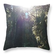 Sun Penetrates The Redwood Forest Throw Pillow