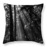 Sun Through The Trees Throw Pillow