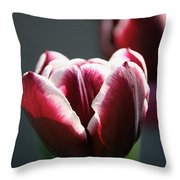 Sun Touched Throw Pillow
