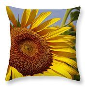 Sun Worshipper Throw Pillow