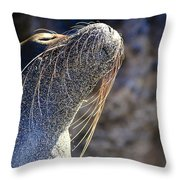 Sunbathing Galapagos Sea Lion Throw Pillow