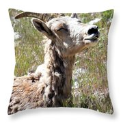 Sunbathing Mountain Sheep Throw Pillow