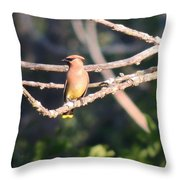 Sunbathing Cedar Waxwing  Throw Pillow