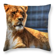 Sunbathing Lioness  Throw Pillow