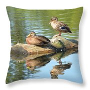 Sunbathing Mallards Reflecting Throw Pillow