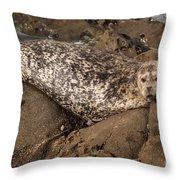 Sunbathing Sea Lion Throw Pillow