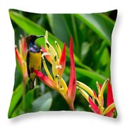 Sunbird On Heliconia Ginger Flowers Singapore Throw Pillow