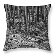 Sunday Afternoon Lazing-black And White Throw Pillow