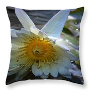 Sundown At Lotus Pond Throw Pillow