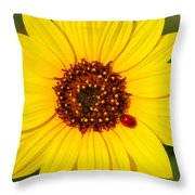 Sunflower And Ladybird Beetle 2am-110490 Throw Pillow