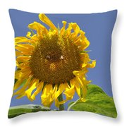 Sunflower At Latrun Throw Pillow