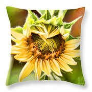 Sunflower Beauty - Painterly Throw Pillow