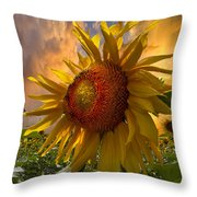 Sunflower Dawn Throw Pillow by Debra and Dave Vanderlaan