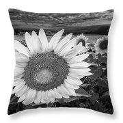 Sunflower Field Forever Bw Throw Pillow