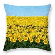 Sunflower Field, North Dakota, Usa Throw Pillow