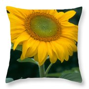 Sunflower In Seattle Throw Pillow