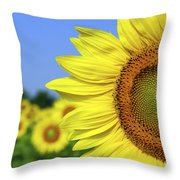 Sunflower In Sunflower Field Throw Pillow by Elena Elisseeva