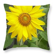 Sunflower Throw Pillow by Lisa Phillips