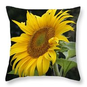 Sunflower Looking To The Sky Throw Pillow