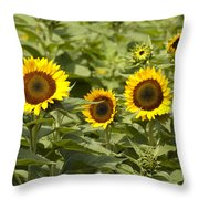 Sunflower Patch Throw Pillow by Bill Cannon
