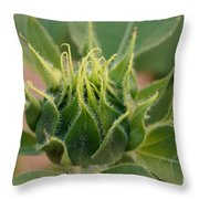 Sunflower Pod Throw Pillow