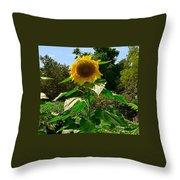 Sunflower Sally Throw Pillow