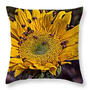 Sunflower With Ladybugs Throw Pillow