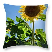 Sunflower With Sun Throw Pillow by Donna Doherty