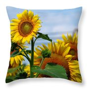 Sunflowers 1 2013 Throw Pillow by Edward Sobuta