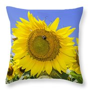 Sunflowers And Blue Sky Throw Pillow