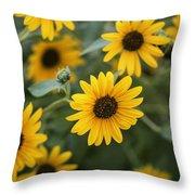 Sunflowers Bloom Throw Pillow