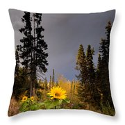 Sunflowers In Northern Garden In Fall Throw Pillow