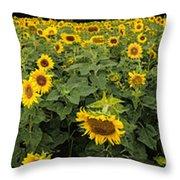 Sunflowers Panorama Throw Pillow