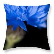 Sunkissed Cornflower Throw Pillow