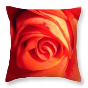 Sunkissed Orange Rose 11 Throw Pillow