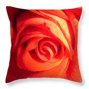 Sunkissed Orange Rose 11 Throw Pillow