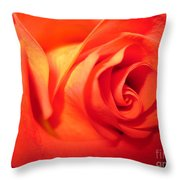 Sunkissed Orange Rose 6 Throw Pillow
