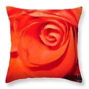Sunkissed Orange Rose 9 Throw Pillow