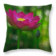Sunlight On Lotus Flower Throw Pillow