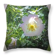 Sunlight On The Wild Pink Rose Throw Pillow