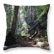 Sunlight Streams In Throw Pillow